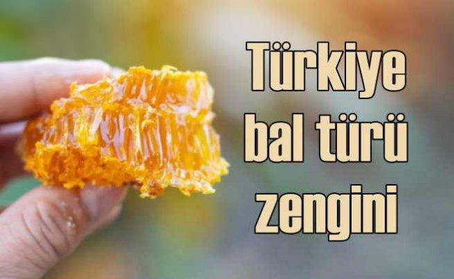 En Çok Bal Çeşidi Türkiye'de!