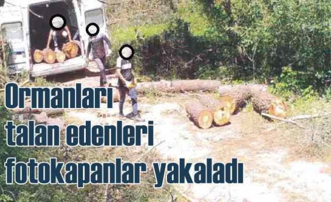 3 Bin Fotokapan Av Peşinde   Ormanı talan edenler yakalandı