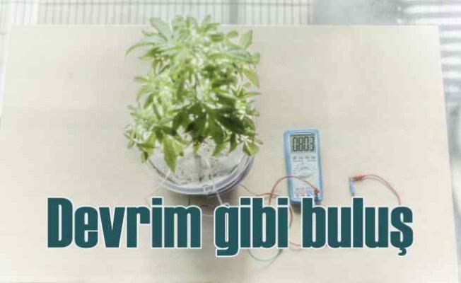 Bitkiler büyürken elektrik üretilebilecek