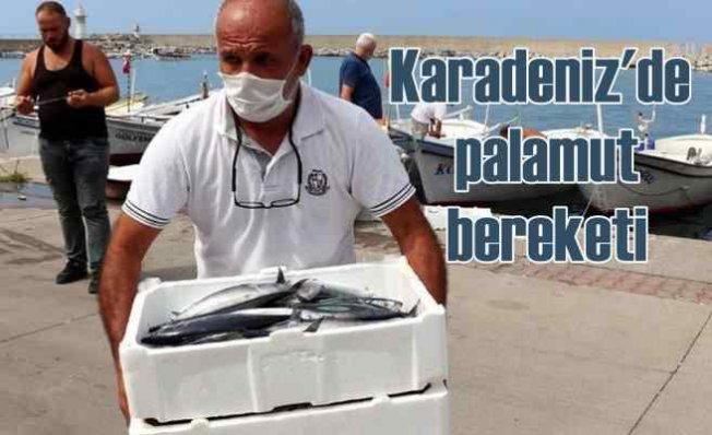 Karadeniz'de palamut bereketi   Ekim'de daha da artacak