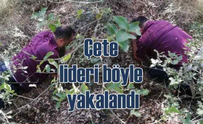 Dolandırıcılık çetesi lideri ormanda yakalandı