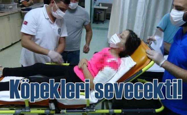 Pitbull saldırısında 11 yaşındaki kız ağır yaralandı