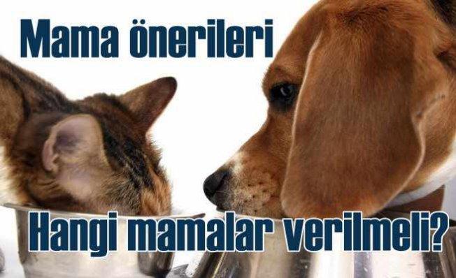 Kedi ve Köpeklere Mama Önerileri