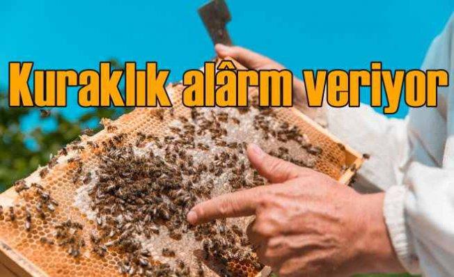 Kuraklık alârm veriyor   Bitkiler ve arılar yok oluyor
