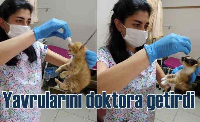 Kedi yavrularını tedavi için doktorlara getirdi