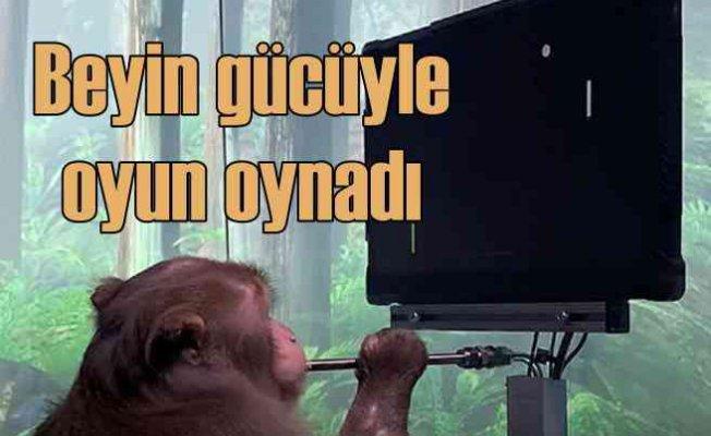 Maymun, beyin gücüyle bilgisayarda oyun oynadı