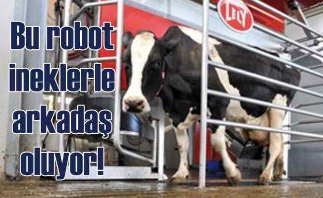 Süt sağan robot | Ahırlar mandıralar akıllı robotlara kalıyor