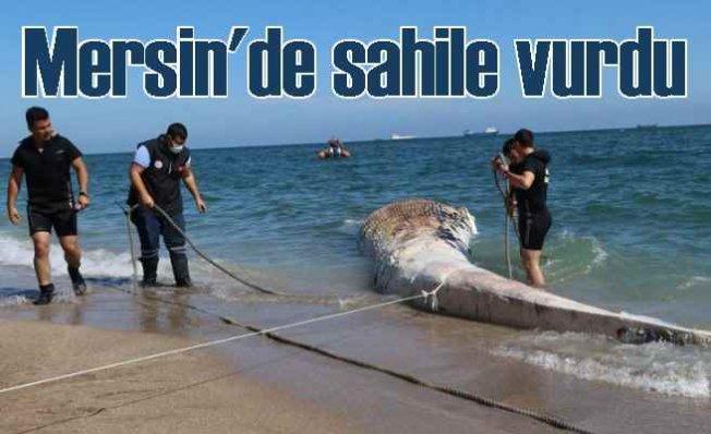 Plastik atıkları mı öldürdü   Dev balina Mersin'de sahile vurdu
