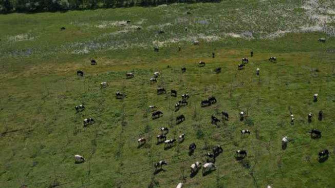 Yem desteği İBB'den, halk süt üreticiden
