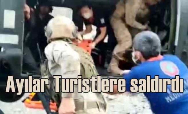 Ayılar Ovacık'ta Çinli turistlere saldırdı