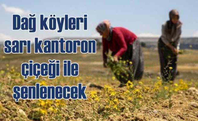 Sarı Kantoron dağ köyleri için umut oldu