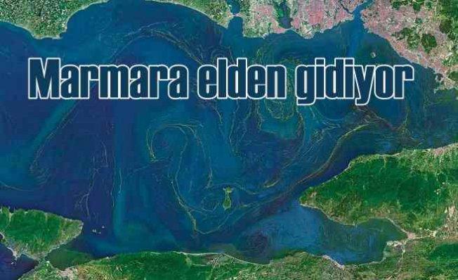 Marmara'da hayaller oksijen, gerçekler ölü balıklar
