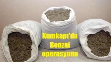 Kumkapı ve Aksaray'da bonzai operasyonu