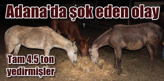 Adanada at eti operasoynu | Zabıta dehşete düştü