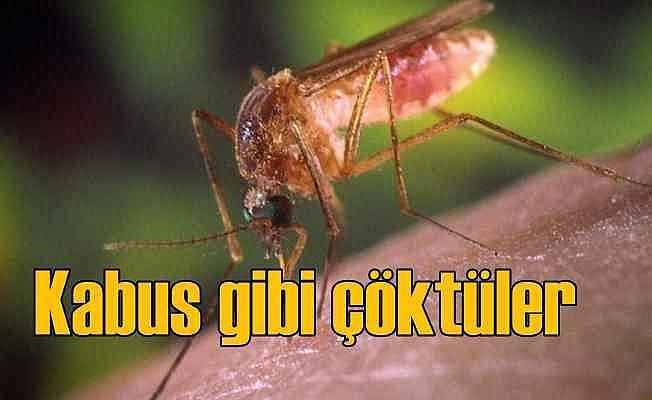 İstanbul'u sinekler bastı   Tehlikeli virüs bulaşabilir
