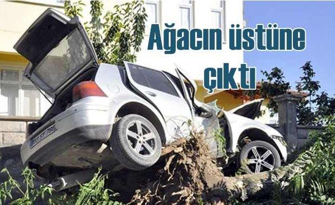 Otomobil ağacın üstündde asılı kaldı