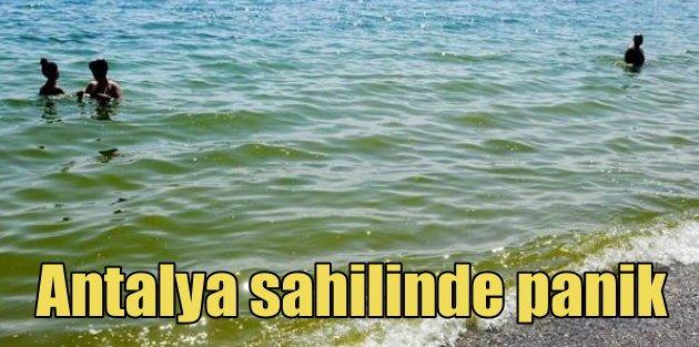 Antalya sahilinde panik, ölü balıklar sahile vurdu
