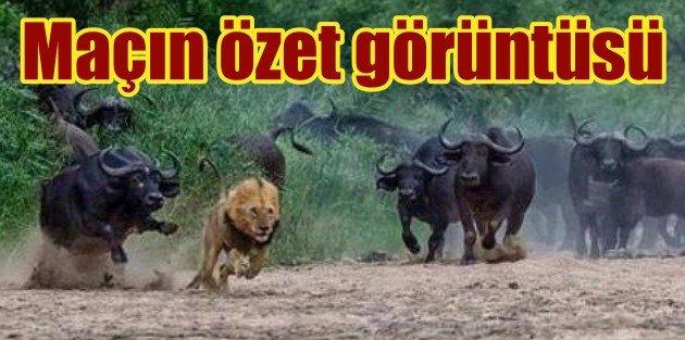 Aslan, Arenada perişan oldu, Galatasaray 0,  Borussia Dortmund 4