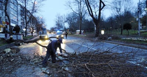 Fırtına Beşiktaş'ta ağaç devirdi yol kapandı