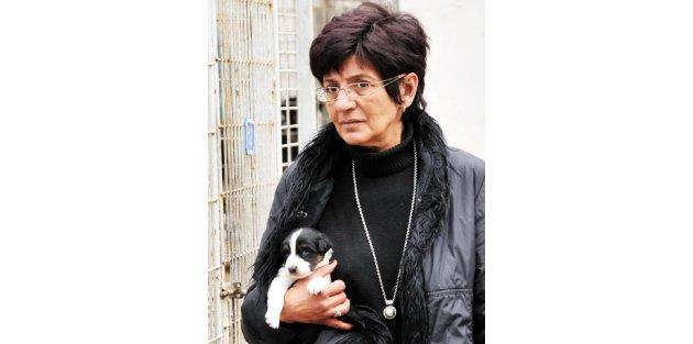 Bodrum'da Vahşet; Köpeğini Cadde Ortasında Öldürdü
