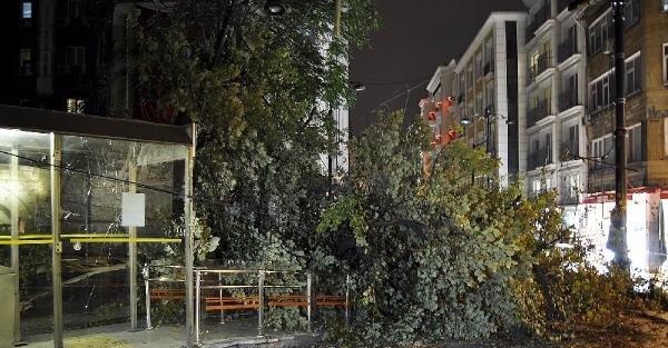 Fotoğraflar// Fatih'te Tramvay Durağı'na Ağaç Devrildi: 2 Yaralı