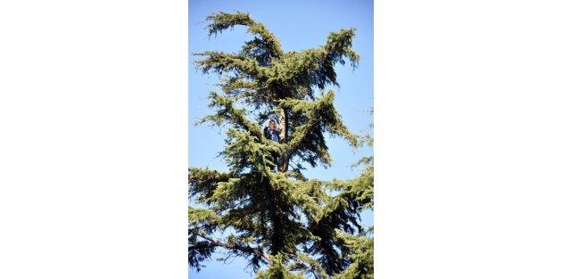 Hastane Bahçesinde Ağaca Çikarak İntihara Kalkıştı