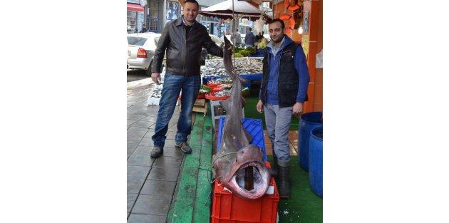 Marmara'da 2 Metrelik Köpek Balığı Yakalandı
