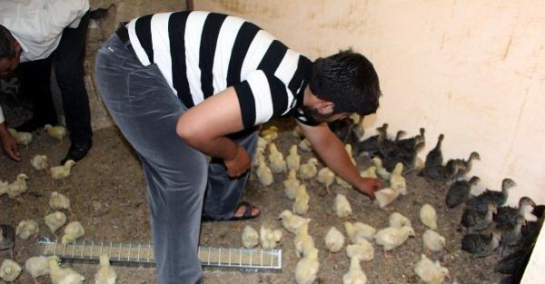 Nusaybin'de 4 ayaklı civciv şaşırttı