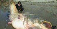 127 kiloluluk dev yayın balığı yakaladılar