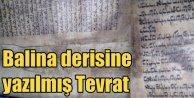 Balina derisine yazılı tevrat; Tam 600 yıllık