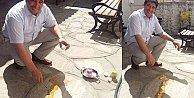 Kavurucu sıcakların etkili olduğu Muğla#039;da asfaltta yumurta pişirdiler