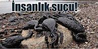 İzmit Körfezi#039;nde ölüm kalım savaşı; Kirlilik öldürüyor