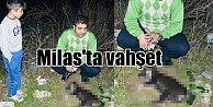 Muğla Milas'ta kedi köpek katliamı