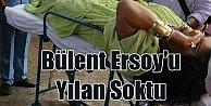 Bülent Ersoy#039;u yılan soktu: Diva Hindistan#039;ta ölümden döndü