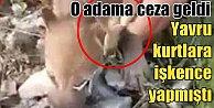 Arazide bulduğu yavru kurtlara işkence yapan adama ağır ceza