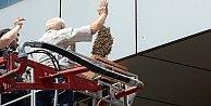 Arılar banka bastı