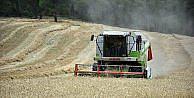 'Buğdayda yüzde 25-30 artışla 120-130 bin ton rekolte bekliyoruz'