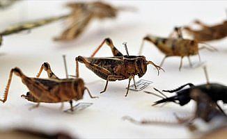 'Dünyanın esas sahibi böceklerdir'