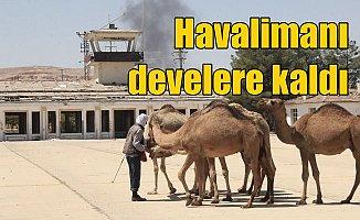 Havaalanı pistleri kurbanlık develere kaldı