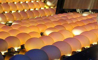 Türkiye'deki yumurtalarda