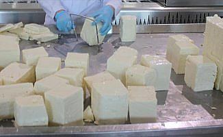 'Ezine peyniri Yunanistan'ın Feta'sına rakip olacak'