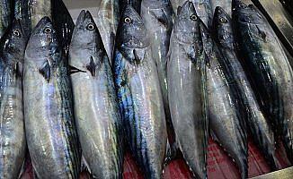 Karadenizli balıkçıların umudu 'Kestane Karası Fırtınası'