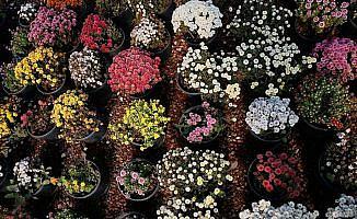 'Çiçeğin başkenti' kışa hazırlanıyor