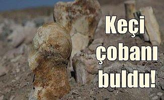 Keçi çobanı 6 milyon yıllık mamut fosili buldu