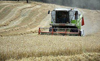 Tahıl ve meyve üretiminde artış bekleniyor