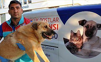Sokak hayvanlarına 'özel' ambulans