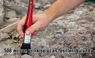 Kanada'da 508 milyon yıllık solucan fosilleri bulundu