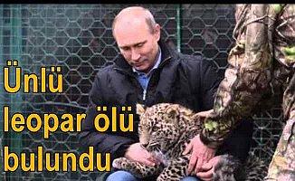 Putin'e acı haber; Leoparı ölü bulundu