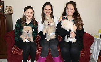 Üniversite öğrencisi yavru köpeklere 'yediemin' oldu