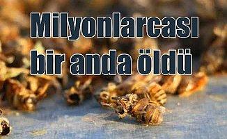 Milyonlarca arı bir anda öldü: Mısır ilacı arıları katletti